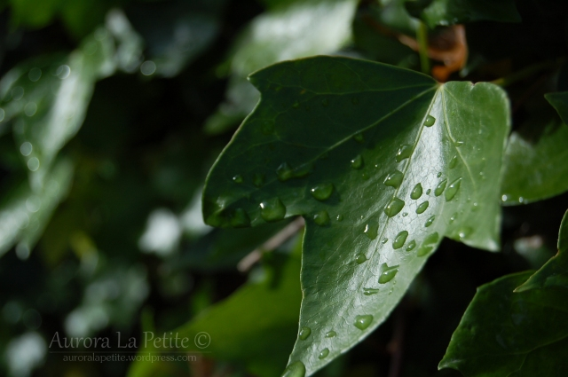 Wet Leaf in Galway