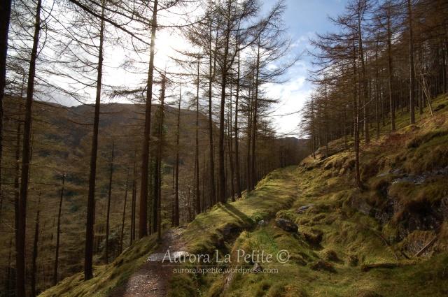 Woodland Walks, Ireland