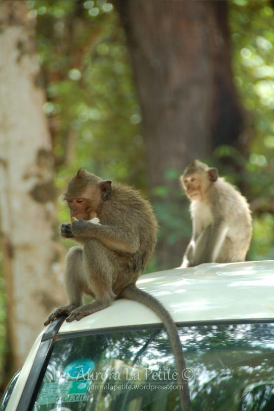Monkey Bayon