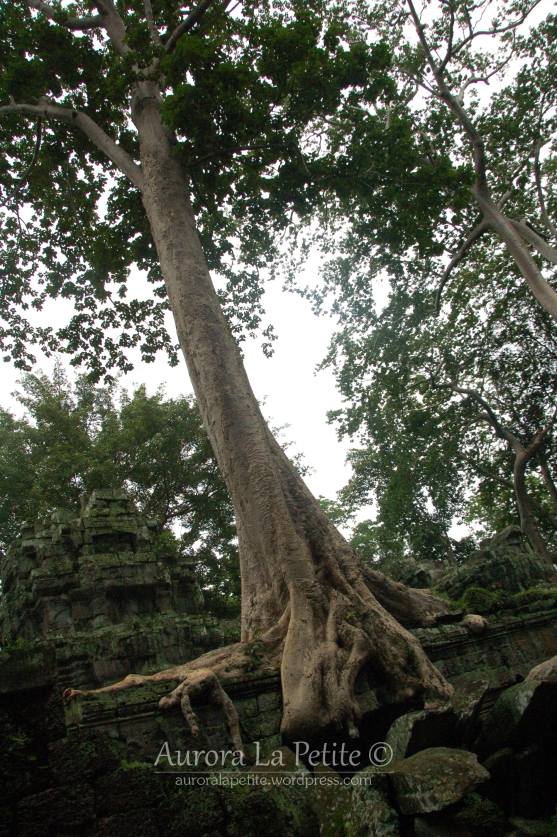 Ta Prohm Tree Temple 1