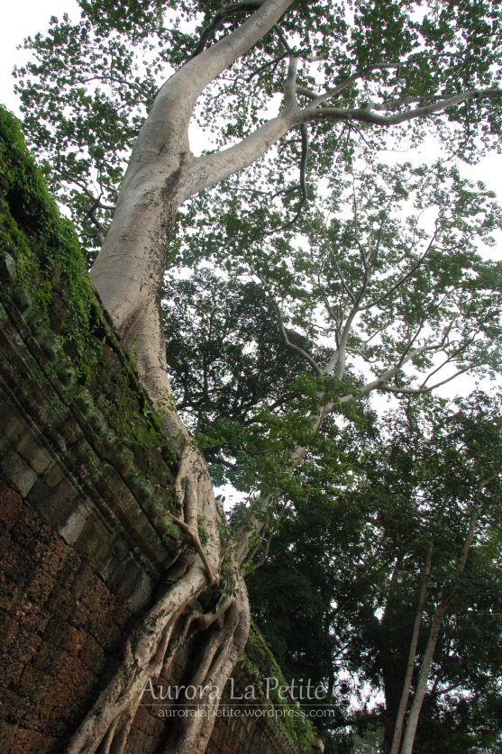 Ta Prohm Tree Temple 2