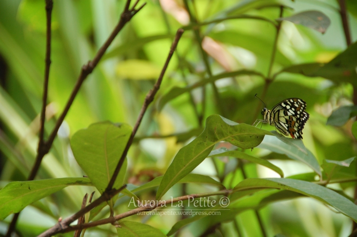 Brown Butterfly in Greenery