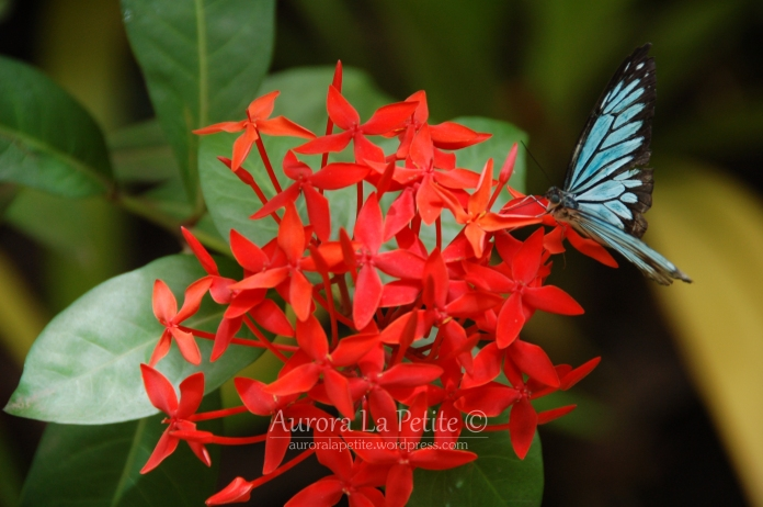 Red Flower, Blue Butterfly
