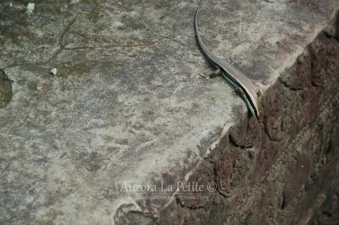 Lizard Angkor Wat