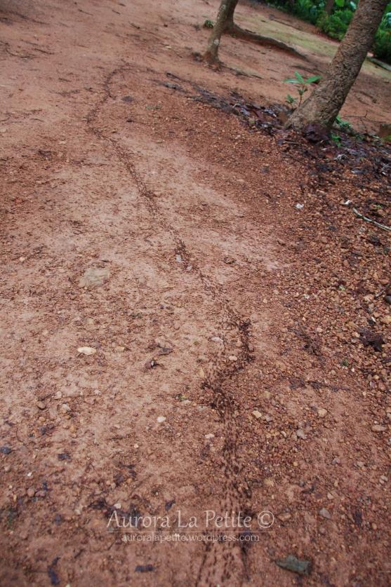 Termites March